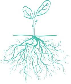 Plants roots e1508778743449