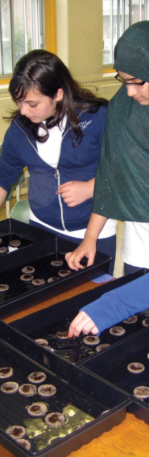 students examining seeds in germination pods